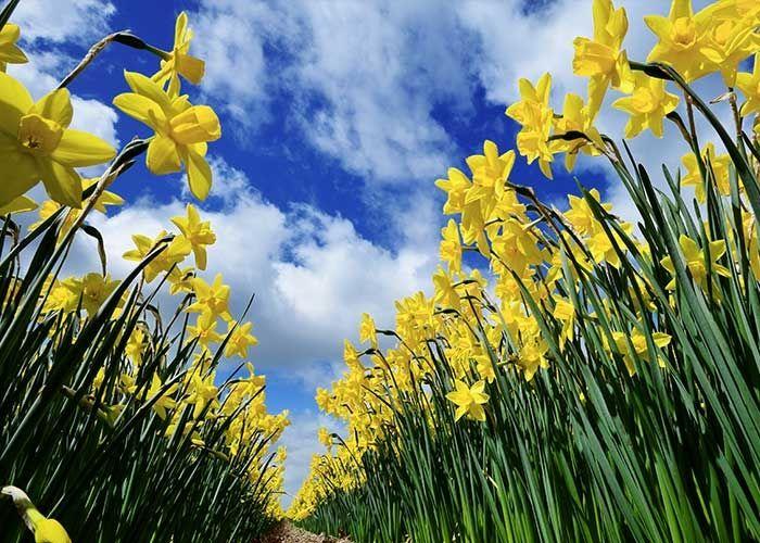 La promesa de la primavera