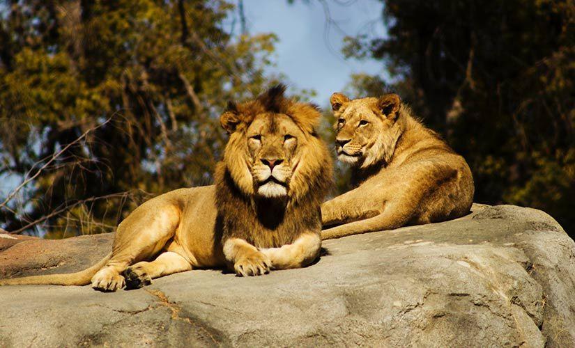Dietas, sueños, leones y visiones